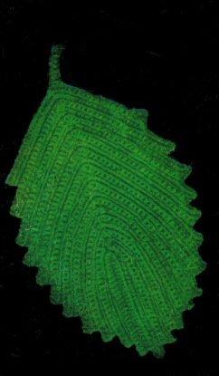 Leaf Hot Plate Pattern