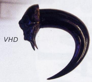Vampire Horn of Death