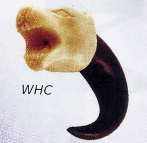 Wolf Head Claw