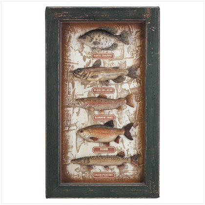 Freshwater Fish Shadow Box