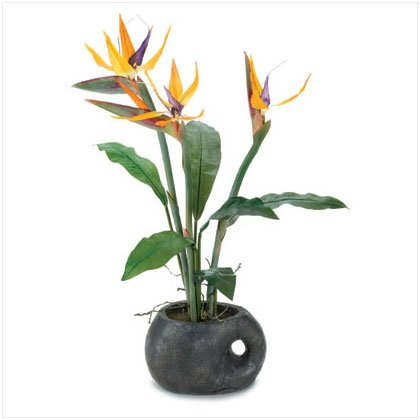 "26""  Bird Of  Paradise In Terra Cotta Pot"