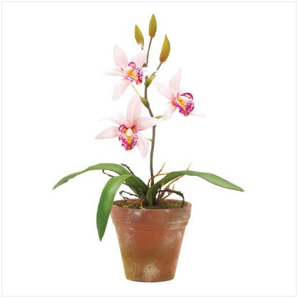 "10"" Potted Pink Orchids"