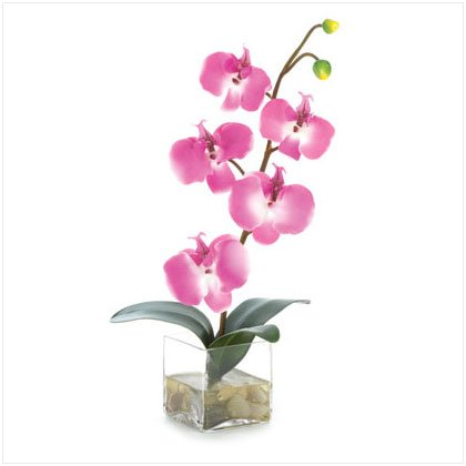 "14 1/2"" Orchid In Glass Vase"