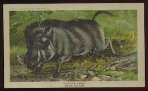 1890 Victorian Trade Card - Arbuckle Brothers Coffee Company - VLACKE VARK (Sus scrofa) (#7)