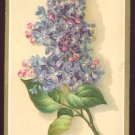 Ridley Chambers St. Candy Manufactory Victorian Trade Card - Lilacs