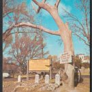 HANGMAN'S TREE, Boot Hill Cemetery, Dodge City, Kansas - Unused Post Card