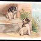 Victorian Trade Card - Arbuckle Brothers Coffee Company - Two puppies sitting on stone steps
