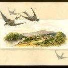1886 L. PRANG Victorian Trade Card - FLEISCHMANN & CO., COMPRESSED YEAST - Swallows
