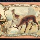 C. BERIOT Victorian Trade Card - CHICOREE EXTRA A LA BELLE JARDINIERE - Chamois