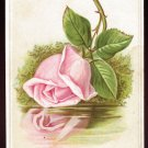 CAPITAL COFFEE Victorian Trade Card - Giant pink rose