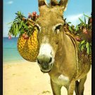 1980s JAMAICA - Native Donkey - Unused Postcard