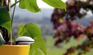 NEW! Koubachi Wi-Fi Plant Sensor-Outdoors