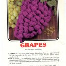 Annie's Attic Luscious Fruit Potholders Grapes Crochet Pattern 344