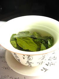 Green Tea (Camelia sinensis)