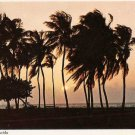 Tropical Florida Palm Trees Postcard
