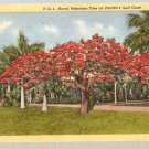 Florida Royal Poinciana Tree on FL Gulf Coast Postcard