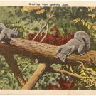 Greetings from Levering Michigan Squirrels Postcard B