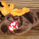 Ty Beanie Babies Chocolate the Moose NM with Tags