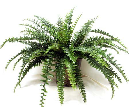 Large Fern in Embossed Planter