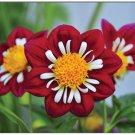 Dahlia Floral Boxed Notecard Set