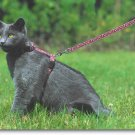 Leash Training A Cat