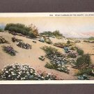 Vintage Postcard Wild Flowers on the Desert, California Unused Postcards
