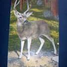 A WILD BUCK BIG BASIN California-26  B.C. Kropp Co Natural Color Vintage Linen Postcard