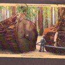 1939 A Fallen Giant Humbolt State Redwood Park Redwood Highway California Linen Postcard