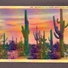 Vintage 1931 1A-H547 SENTINELS OF THE DESERT Giant CACTUS Sahuaro Linen Postcard