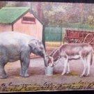 Elephant & Donkey Postcard - Used