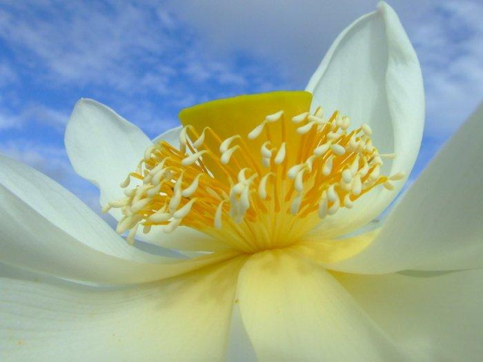 desktop flower picture,digital art photo COMPUTER Free Shipping