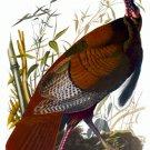 """Audubon """"Wild Turkey"""" HUGE Audubon Art Print Edition"""
