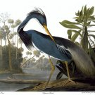 "Audubon ""Louisiana Heron""HUGE Audubon Art Print Edition"