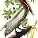 "John James Audubon ""Brown Pelican"" Art Print"
