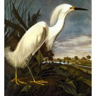 "John James Audubon ""Snowy Egret"" Beautiful Art Print"