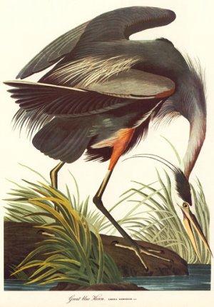 "John James Audubon ""Great Blue Heron"" Art Print"