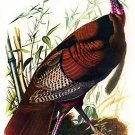 "John James Audubon ""Wild Turkey"" Beautiful Art Print"