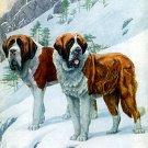 """Saint Bernard"" by Louis Agassiz Fuertes Art Print"
