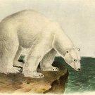 "John James Audubon ""Polar Bear"" Beautiful Art Print"