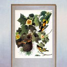 "John James Audubon ""Baltimore Oriole"" Art Print"