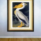 "Audubon ""White Pelican"" HUGE Fine Art Folio Edition"