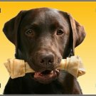 LP-2164 Chocolate Labrador Retriever Dog Pet Novelty License Plate