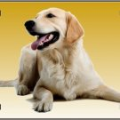 LP-2170 Golden Retriever Dog Pet Novelty License Plate