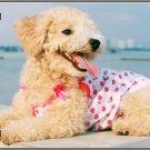 LP-2176 Poodle Dog Pet Novelty License Plate