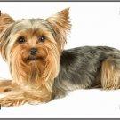 LP-2181 Yorkshire Terrier Dog Pet Novelty License Plate