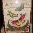 Butterfly And Moss 3D Framed Altered Art Picture
