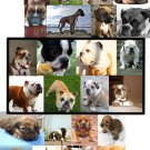 Choose DOG Boxer BuLLdog CoCKeR sPaniel MAGNET