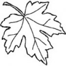 Impression-Obsession - Pointy Oak Leaf