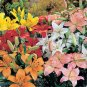 ASIATIC LILY HYBRIDS color mix 50 seeds