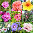 HIBISCUS SYRIACUS - ROSE OF SHARON variety mix 50 seeds